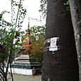 寺院内の禁煙表示