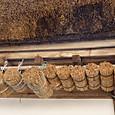 マメコバチの巣用の葦