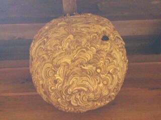 スズメバチの巣 完成